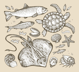 sea animals. hand-drawn sketches fish, trout, herring, turtle, stingray, scallop, anchovy, clam, shell, starfish. vector illustration