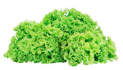 Fresh green lettuce isolated on white background clipping path