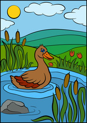 Color pictures: birds. Cute duck swims on the pond and smiles.