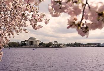 Thomas Jefferson Memorial. Cherry Blossom Festival. Washington,