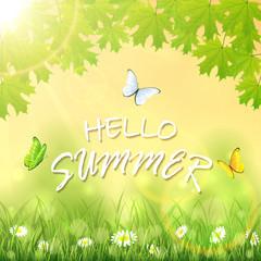 Hello Summer and butterflies
