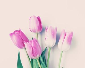 Pink tulips over beige background
