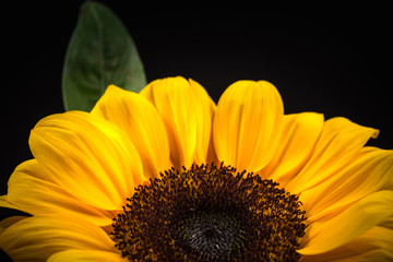 Flower, sunflower, close-up, macro.