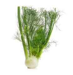 fennel on white background