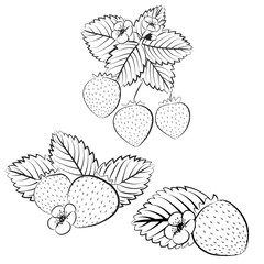 Strawberry plant and berries outline set. Collection of contour