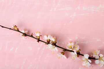 blossoming branch of a peach on pink wooden background