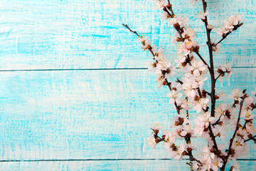 blossoming branch of a peach on blue wooden background