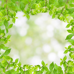 Fresh Green leaf frame with water drops  isolated on nature gre