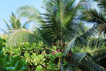 Tropical trees in exotic forest.