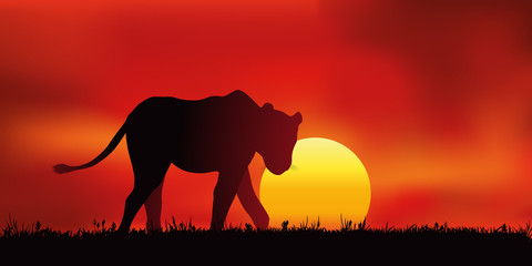 Lionne - Coucher de soleil