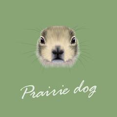 Vector Illustrated Portrait of Prairie dog.