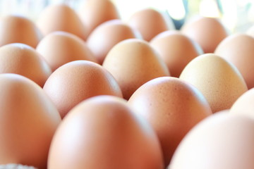 composition of chicken eggs that are in storage and ready to be distributed