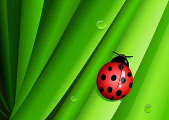 Graphic illustration of a lady bug on green leaves