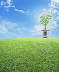 Light Bulb with small plant inside and green grass field over bl