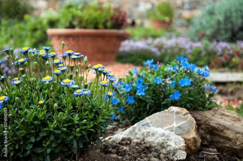 Giardino roccioso con margherite azzurre imagens e fotos - Giardino roccioso foto ...