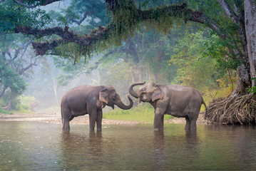 Asian Elephants in a natural river at deep forest, Thailand Wall mural