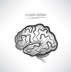 Human brain isolated. Internal organ icons sketch