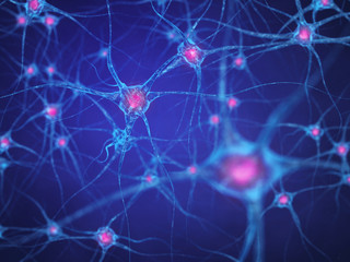 Neural network , Brain cells , Human nervous system , Neurons