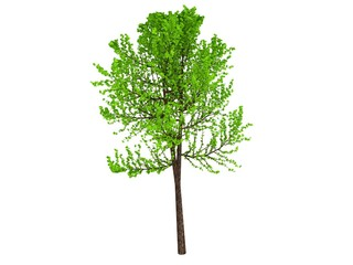 3D tree isolated render