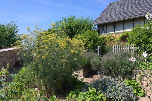 fenchel i garten in der sababurg stockfotos und. Black Bedroom Furniture Sets. Home Design Ideas