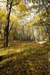 autumn forest , closeup