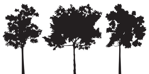 Set of trees vector silhouette