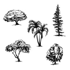 drawing collection of 5 elements of different types of trees graphic ink sketch hand drawn vector illustration