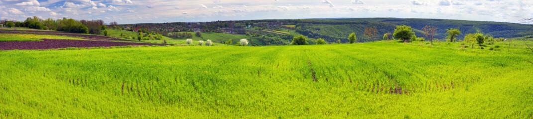 Keuken foto achterwand Pistache Fresh green field