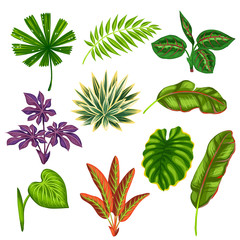 Set of stylized tropical plants and leaves. Objects for decoration, design on advertising booklets, banners, flayers