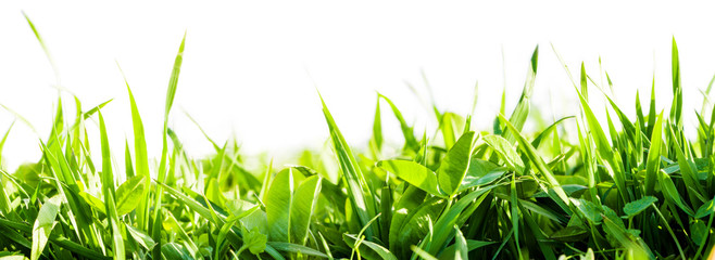 Wall Mural - green grass background
