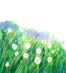 illustration dandelion flower.Summer dandelion flower.Meadow plant background.