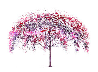 Blossom cherry tree.Watercolor hand drawn illustration