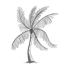 Vector Illustration of a Hand Drawn Palm Tree