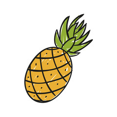 Vector Illustration of a Hand Drawn Pineapple
