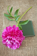 peony and book. Teacher's day concept