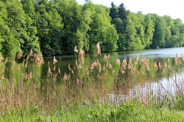 nature water river landscape summer