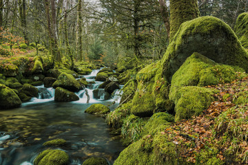 Fast flowing stream in ancient forest