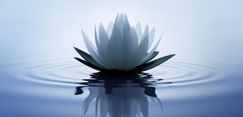Lotusblüte in dunklem Wasser 2 Fototapete
