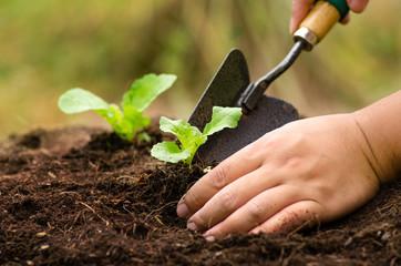 Farmer planting sapling into soil Wall mural