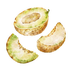 Isolaited white background with melon. Watercolor illustration.