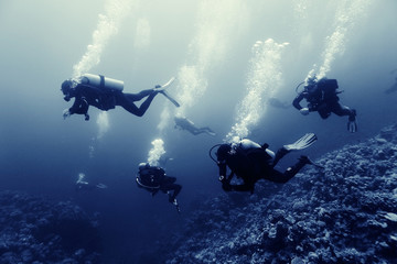 divers underwater the sea Wall mural