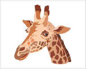 Giraffe head isolated on a white background.