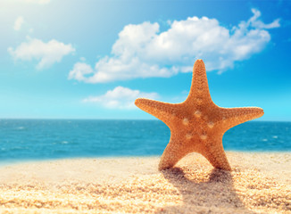 Summer beach.  Starfish on a beach sand against the background of the ocean.