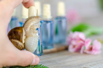 Hand holds a snail surrounded cosmetic products on the old woode