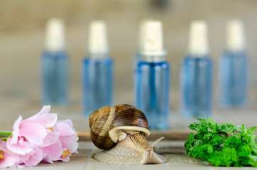 Snail and flowers and green plants in front and close, ampoules