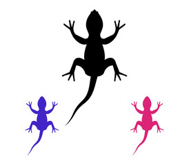 lizards on a white background
