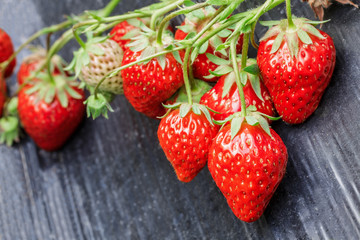 Ripe strawberry fruit grows in the plantation