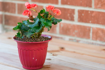 pot with red flowers