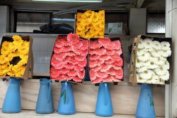 Gerbera flowers Market Porto Portugal