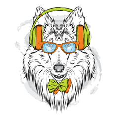 Pedigree dogs painted by hand. Collie wearing headphones and sunglasses. Vector illustration.